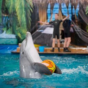 Дельфинарии, океанариумы Каракулино
