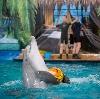 Дельфинарии, океанариумы в Каракулино